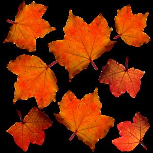 fall-331485_960_720